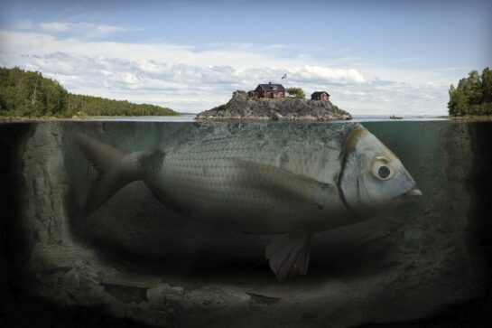 inyay/This image by Erik Johansson includes a real fish he caught himself