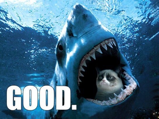 Inyay/grumpy cat good shark