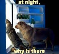 Inyay/why is there a light in the fridge?